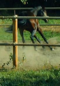Лошади. Ипподром